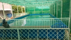 Hồ bơi bạt nhựa di động 07